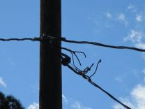 Cut power wires at pole
